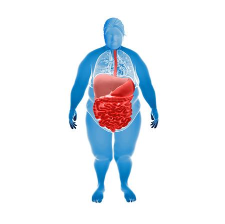 肥満女性の臓器のイラストをレンダリングします。