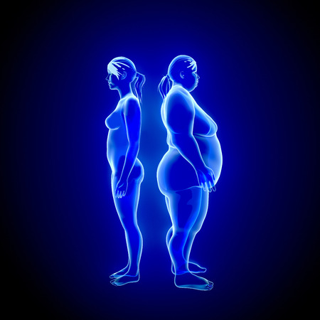 지방과 얇은 여자의 3D 그림입니다. X 선보기 스톡 콘텐츠