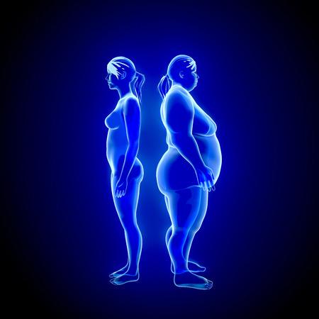 obesidad: 3d ilustración de la grasa y de la mujer delgada. vista de rayos X