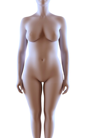 cuerpo femenino: Ilustraci�n de la representaci�n 3d del cuerpo femenino Foto de archivo