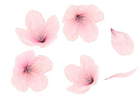 Gevoelige roze bloesem van de kers op een witte achtergrond