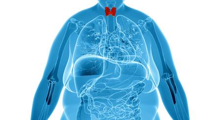 Mujer tiroides glándula anatomía en vista de rayos x