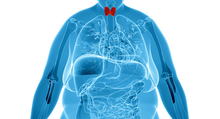 Female thyroid gland  anatomy in x-ray view Standard-Bild