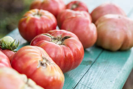 A pail of freshly picked raspberry tomatoes  on rustic background Stock Photo