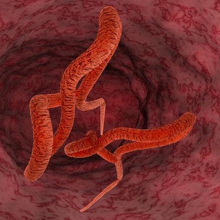 Digital illustration of Ebola virus illustration