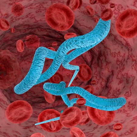 Digital illustration of Ebola virus