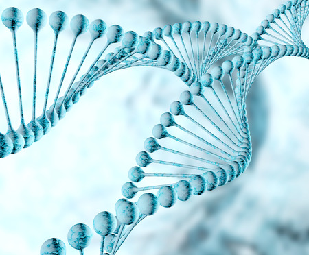 dna double helix: Dna double helix molecules and chromosomes