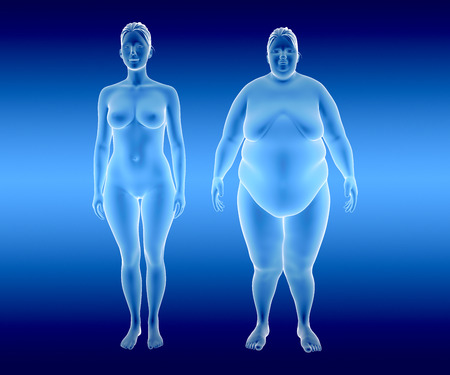3d illustration of fat and thin woman. x-ray view