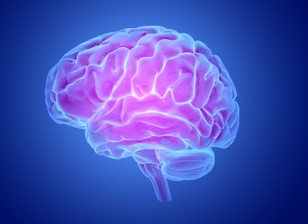 Brain model xray look isolated on blue  background