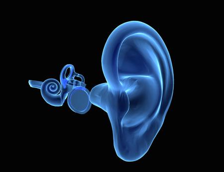 oido: Ilustración 3D de la anatomía del oído con tímpano, martillo, yunque y stapeson Foto de archivo