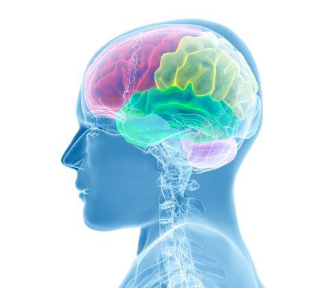 Brain model xray look - 3D render illustration