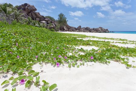 Petite Anse La Digue Seychelles