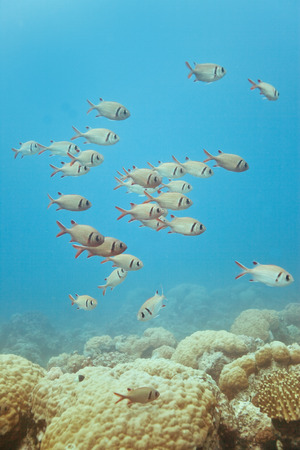 Diving in Mauritius Africa