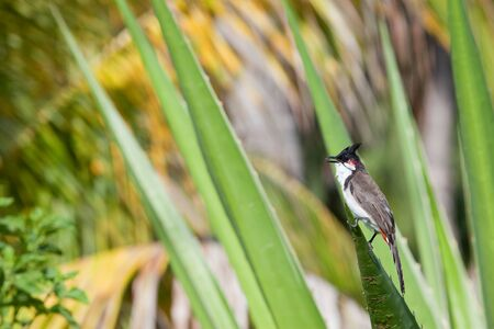 Bird of Mauritius Africa Stock Photo