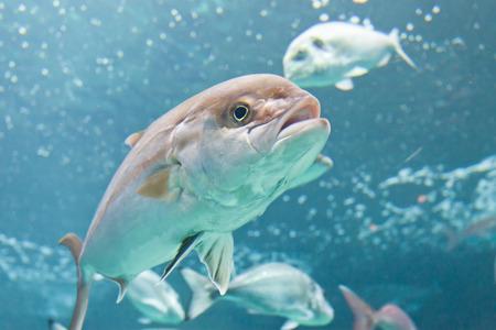 Fish Crete Greece Stock Photo