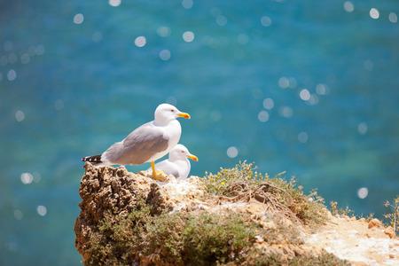 Sea gulls in Algarve, Portugal Stock Photo