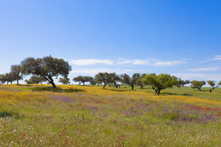 Nature of Algarve in Portugal