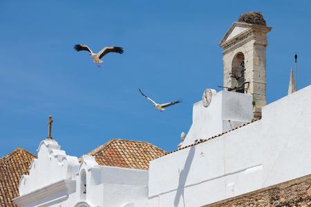 Storks of Faro in Algarve, Portugal