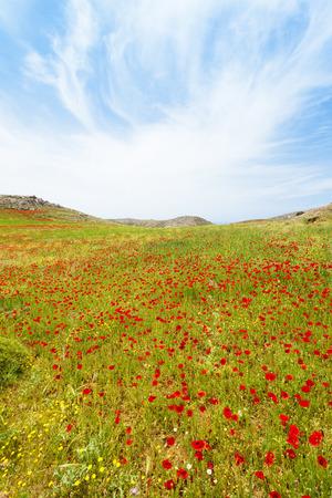 Flowers field in Prevelhi, Crete, Greece