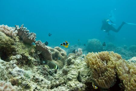 Diving at the reefs of Mauritius