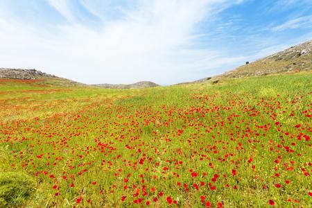 A meadow near Prevelhi Crete Greece Stock Photo