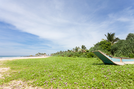 Asia - Sri Lanka - Ahungalla - A huge flower meadow at the beach Stock Photo