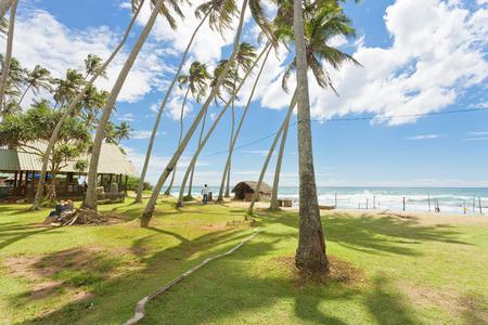 Koggala Beach, Sri Lanka, Asia - Palm trees on a meadow at Koggala Beach Standard-Bild - 96865881