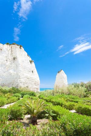 Vieste, Italy, Europe - Vegetation at the chalk rocks of Vieste Standard-Bild - 101152832