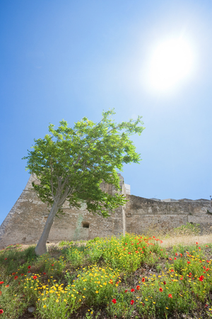 Vieste, Italy, Europe - A tree rising towards the sun at the historic fortress of Vieste