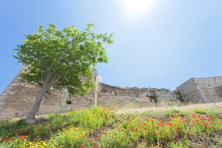 Vieste, Italy, Europe - Poppy field at the historic stronghold of Vieste Stock Photo