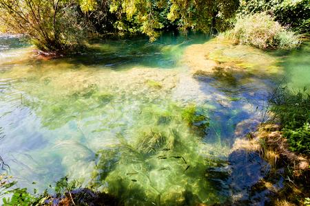 Krka, Sibenik, Croatia, Europe - Flowing with the calm stream of the Krka river Imagens