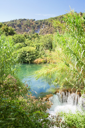 Krka, Sibenik, Croatia, Europe - Water reed at a small downfall within Krka National Park Standard-Bild
