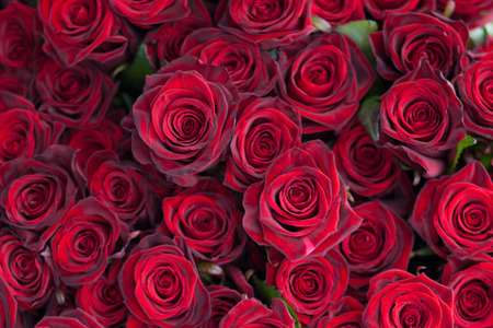 background textures: Big bunch of red roses