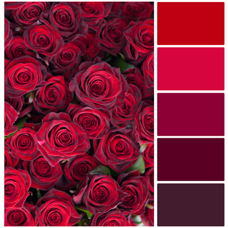 complimentary: Red roses big bouquet colour palette with complimentary swatches