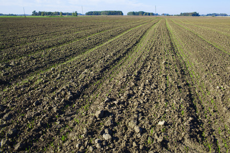 plowed: plowed field with sprouts