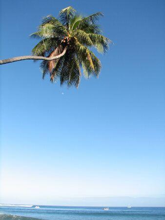 One coconut tree background photo