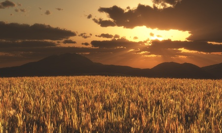 Sunset with cloudy sky over a field of ripe corn and mountains in the background Stock Photo