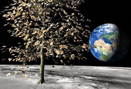 money tree on the moon surface with € 50 bills instead of leaves and the planet earth on the background Stock Photo