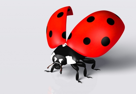 closeup of a ladybug with an open red elytra with black spots, on a white background