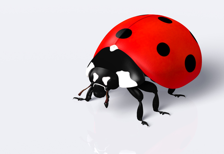 closeup of a ladybug with a red elytra and black spots, on a white background Stock Photo