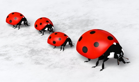 closeup of a ladybug with three other smaller ones behind it placed in a row on a white and gray abstract ground