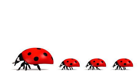 side view of a ladybug with three other smaller ones behind it placed in a row on a white background