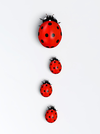 top view of a ladybug with three other smaller ones behind it placed in a row on a white ground