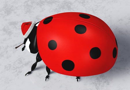 side view of a ladybird that wears on its head a Santa Claus red hat on a grey abstract ground