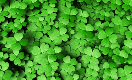 top view of a expanse of four-leaf clovers of different height and dimensions Фото со стока