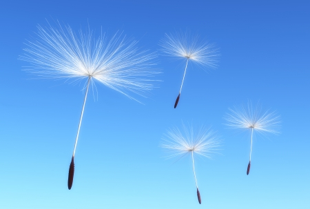 some flying seeds of dandelion are carried by the wind on a blue sky as background