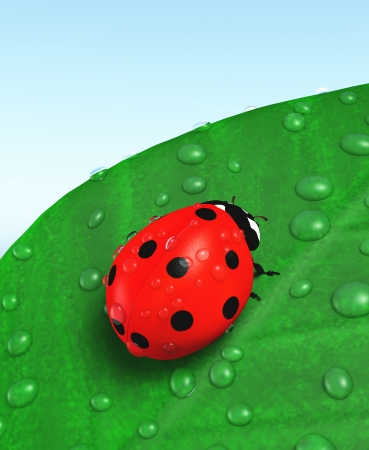 closeup of a red ladybug that stands on a green leaf with some beads dew over them, on a blue sky as background