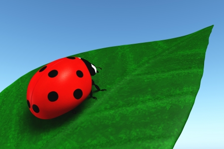 closeup of a red ladybug that stands on a green leaf, on a blue sky as background