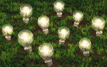 some lit light bulbs with different size are growing as ideas on a grassy soil like plants