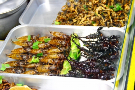 Roasted scorpions and water bugs as snack food in Thailand  photo